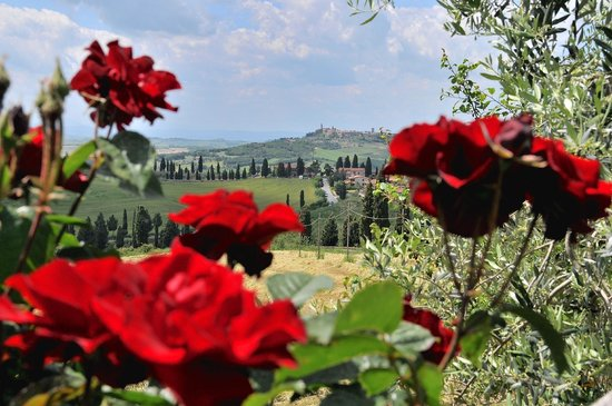 Agriturismo la Casellina: view from the garden with Pienza at the background