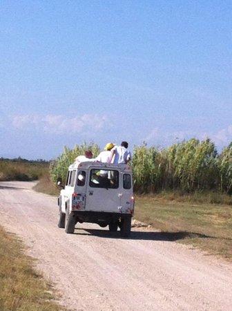 Camargue Découverte : Safari en petite Camargue avec un guide, circuit 1/2 journée