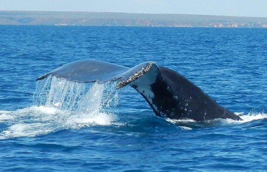 Baleine à bosse à Antsanitia resort