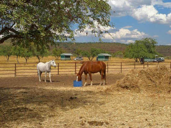 Digger's Rest Station: Two of the bush huts at the pasture
