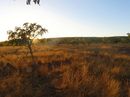 Digger's Rest Station: View from a bush hut