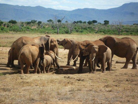 Kingi Safaris - Private Day Tours : Severin Safari Camp