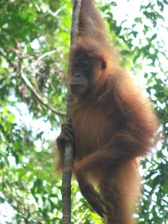 Sumatra Adventure Holidays
