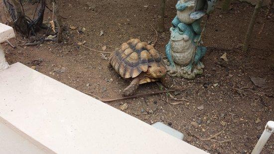 Blue Boy Inn: The Garden Turtle.