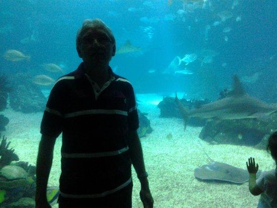 Lisbon Oceanarium : Em frente ao aquário central