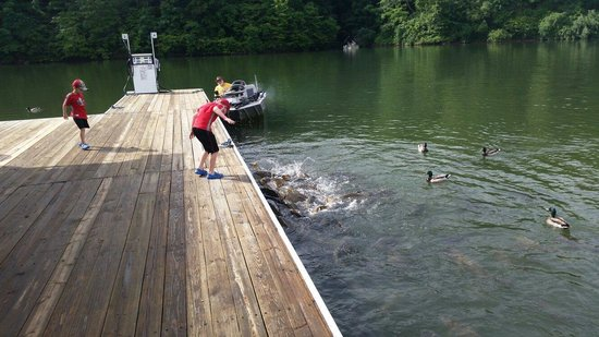 Stonewall Resort: Feeding the Fish at the marina
