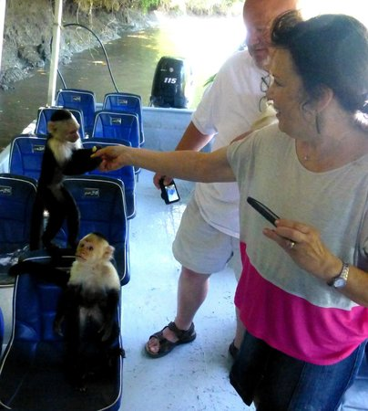 Maleku Tours: Shaking hands with a monkey on the bosy