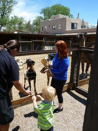 Casa Grande Trading Post & Petting Zoo : Feeding the animals