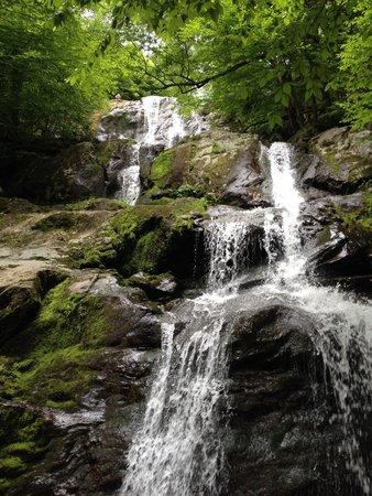 Dark Hollow Falls : Nature's beauty