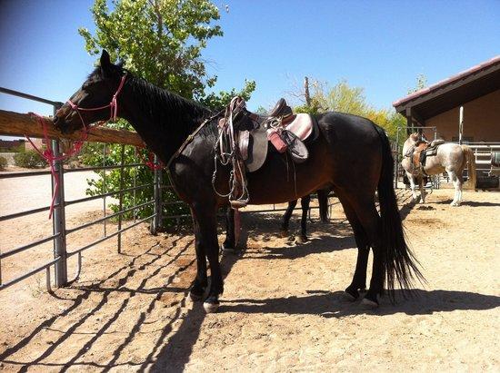 Stagecoach Trails Guest Ranch: N'insistez pas c'est celui de la patronne