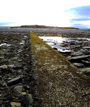 Brough Of Brisay: Seaweed covered walkway between mainland and the island