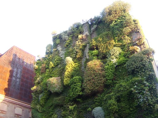 Hotel Paseo del Arte: Wall of plants