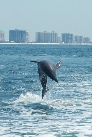 Southern Rose Parasailing And Dolphin Cruises High Jump