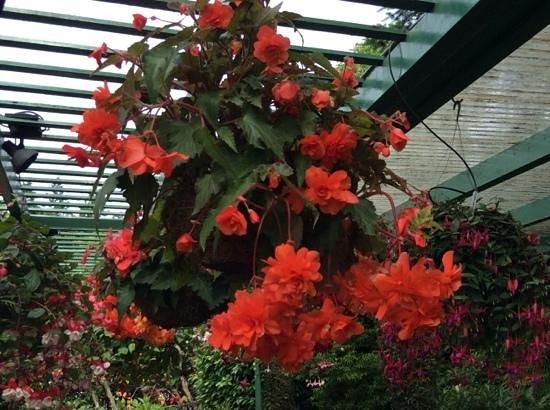 Landsea Tours and Adventures : Beautiful Butchart Gardens