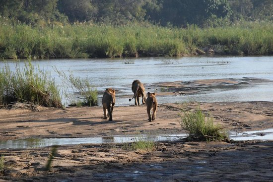 Rattray's on MalaMala: Game drive