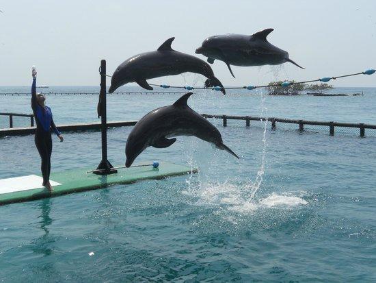Hilton Cartagena : Ver golfinhos, atração indispensável