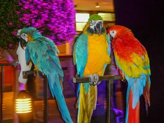 Aparthotel Parque de la Paz: Parrot show x