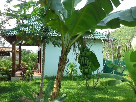 blue kep bungalow : view bungalow