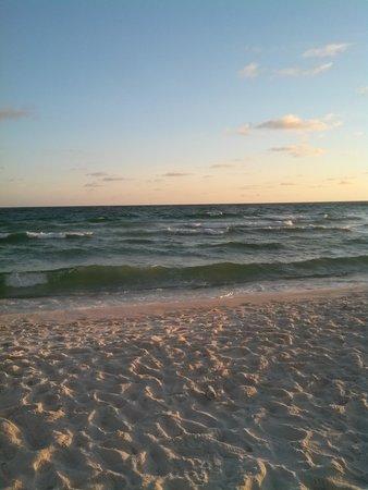 Palm Grove : beach view