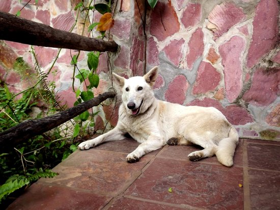 One of the two resident dogs at Castelar da Alvorada.