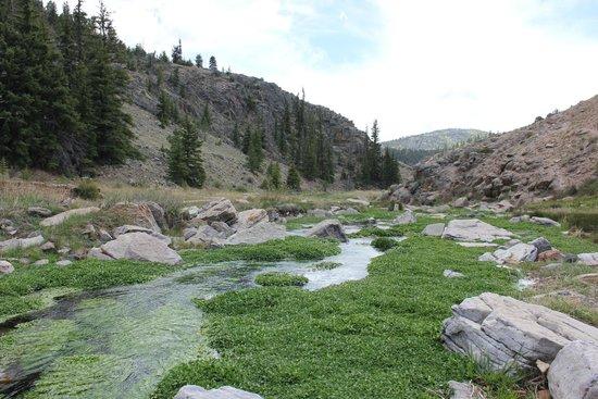 Badger Creek Ranch: Creek in der Näge