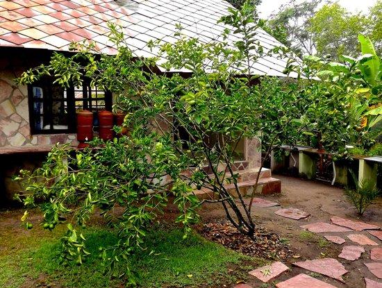 Castelar da Alvorada: Lime tree behind the pousada.