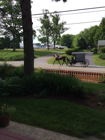 The Australian Walkabout Inn Bed & Breakfast : Horse n' Buggy heading to Sunday service