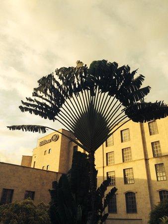 Hilton Malabo: Palmera impresionante