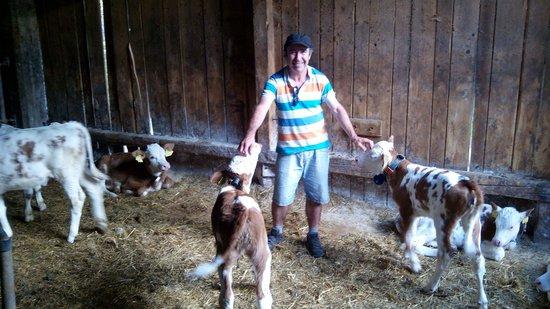 Mulej Tourist Farm: Las vaquitas de la granja