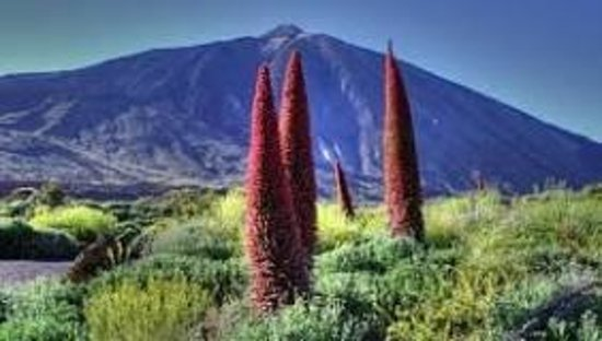 Abeque Turismo Activo: Teide