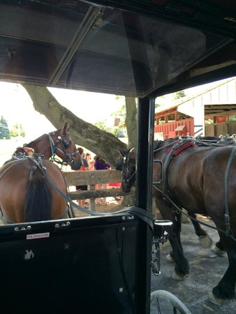 Aaron & Jessica's Buggy Rides : Our View
