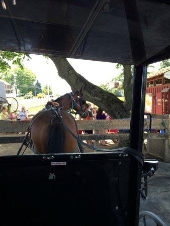 Aaron & Jessica's Buggy Rides : Sally ...