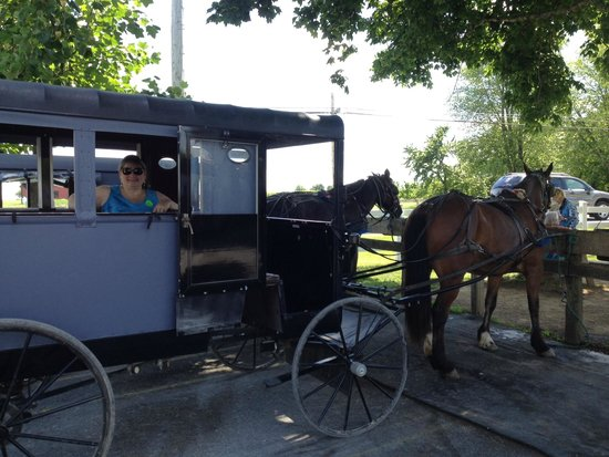 Aaron & Jessica's Buggy Rides : our ride