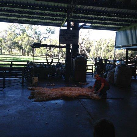 Caversham Wildlife Park: Farm Show