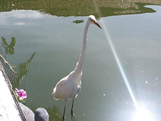 Ayodya Resort Bali: Tiere in der Lagune.