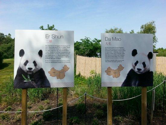 Toronto Zoo: Panda couple