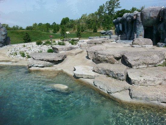 Toronto Zoo: Polar Bears toronto style