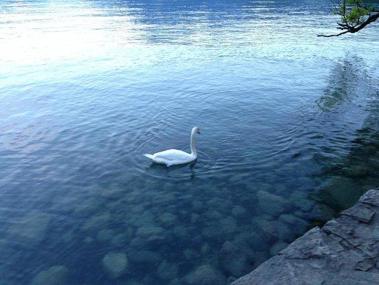 Congress Hotel Seepark: Озеро