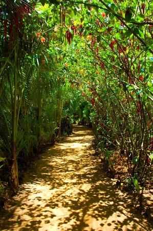 Casa Iguana: Beautiful grounds