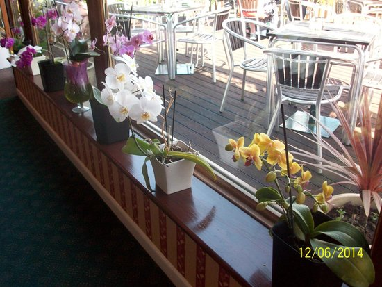 Deck Tea Gardens at Carlton Hotel: lovely orchids