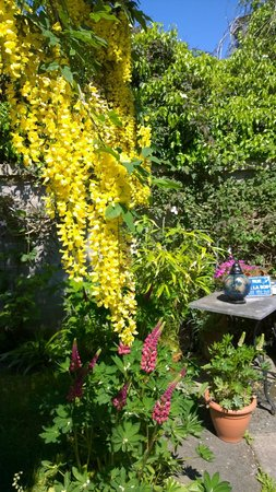 The Braighe Bed and Breakfast : Paert of back garden
