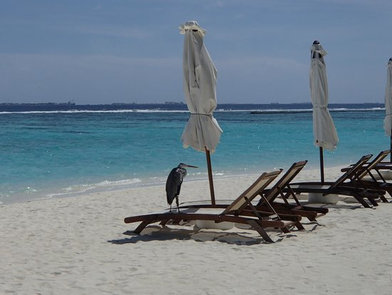 Velassaru Maldives: Beach