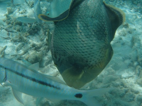Velassaru Maldives : Great Fish