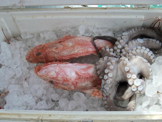 Dimitris Ammoudi Taverna : Catch of the day waiting to be prepared