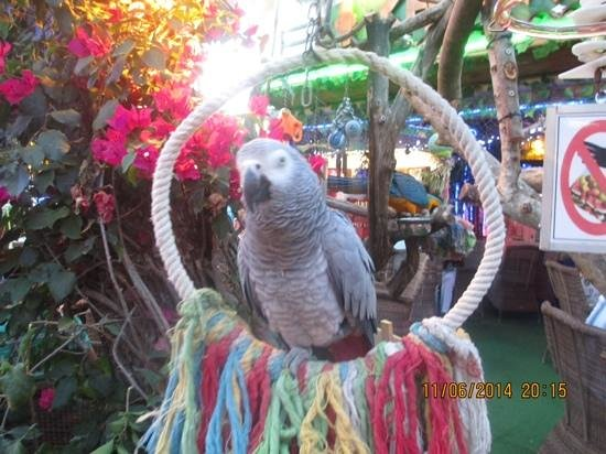 Hotel Marina Skorpios: you can hold parrots