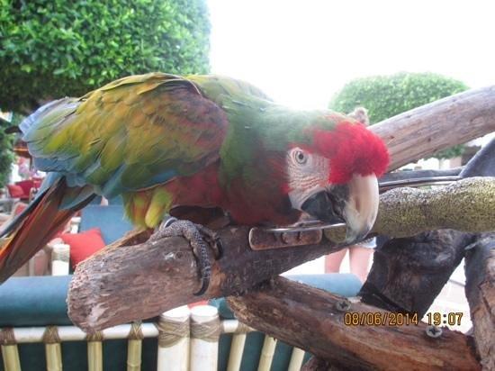 Hotel Marina Skorpios: macaw 18 years old