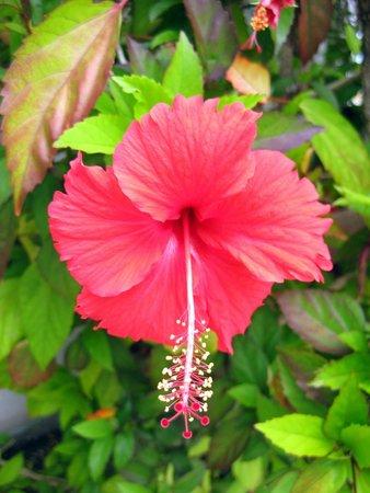 Tres Palmas Inn: More gorgeous flowers