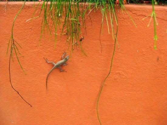 Tres Palmas Inn: A few friendly geckoes