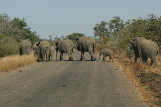 The Vuyani Safari Lodge : Elephant family on the move