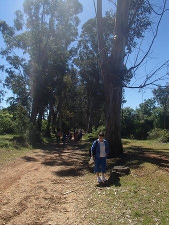 Îles de Lérins : Allée des Eucalyptus